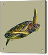 Sea Turtle 2 - Solid Background Acrylic Print