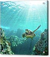 Sea Turtle Coral Reef Acrylic Print