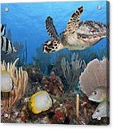 Sea Turtle, Fish, On Colorful Tropical Acrylic Print