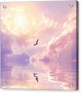 Seagull And Violet Clouds Acrylic Print