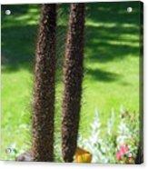 Seed Stalks 2 Acrylic Print