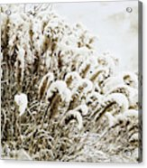 Sepia Snow Acrylic Print