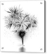 Shades Of Grey Collection Set 06 Acrylic Print