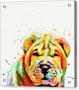 Shar Pei Dog Acrylic Print