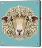 Sheep Portrait. Illustrated Portrait Of Acrylic Print