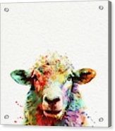 Sheep Portrait Acrylic Print