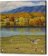 Shenandoah Valley Hawk Acrylic Print