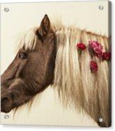 Shetland Pony With Flowers In Mane Acrylic Print