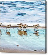 Shorebirds Acrylic Print