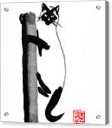 Siamese 03 Acrylic Print