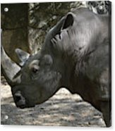 Side Profile Of A Large Rhinoceros With Two Horns  Acrylic Print