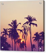 Silhouette Of Palm Trees At Sunset Acrylic Print