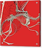 Skeleton Dragon With Red Acrylic Print