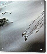 Skier Moving Down In Snow On Slope Acrylic Print