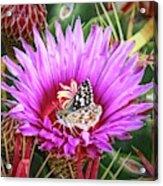 Skipper On Cactus Bloom Acrylic Print