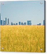 Skyscrapers Arising From Grass Acrylic Print