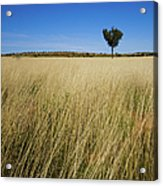 Small Single Tree In Field Acrylic Print