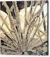 Smashed Window Acrylic Print