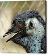 Smiley Face Emu Acrylic Print