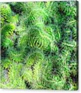 Snake Cactus Acrylic Print