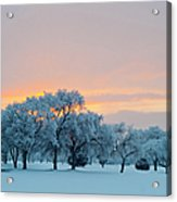 Snow Covered Trees At Sunset Acrylic Print