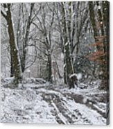 Snow In The Woods Acrylic Print