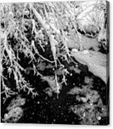 Snow Pa 10-013 Acrylic Print