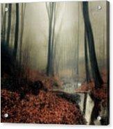 Sounds Of Silence Acrylic Print