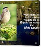 Sparrows Music Acrylic Print