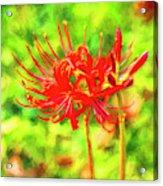 Spider Lily Cezanne Acrylic Print
