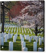 Spring at Arlington Acrylic Print