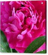 Spring Dahlia Acrylic Print