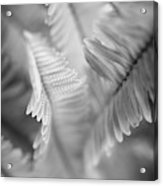 Spring Fern Macro In Black And White Acrylic Print