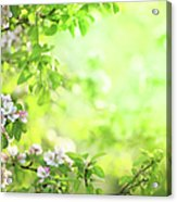 Spring Flowers Blooming Orchard - Acrylic Print