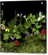 Springs Release Acrylic Print