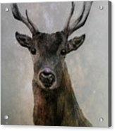 Stag Acrylic Print
