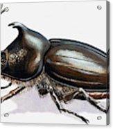 Stag Beetle, 1966 Acrylic Print