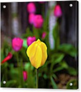 Standing Out Acrylic Print