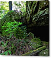 Starburst In The Woods Acrylic Print