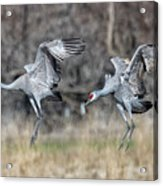 Stay With Your Wingman Acrylic Print