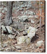 Steep Trails Acrylic Print