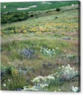 Steptoe Butte View 9276 Acrylic Print