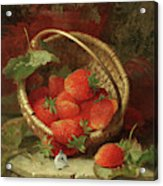 Still Life Of Strawberries With A Cabbage White Butterfly Acrylic Print