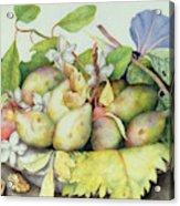 Still Life With Plums, Walnuts And Jasmine Acrylic Print