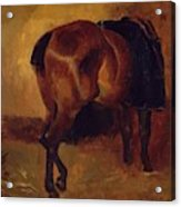Study For Bay Horse Seen From Behind Acrylic Print
