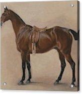 Study Of A Saddled Bay Hunter, 1828  Acrylic Print