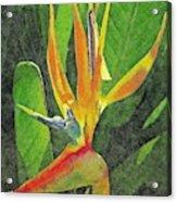 Subject Paradise Acrylic Print