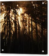 Sultry Morning Radiance Acrylic Print
