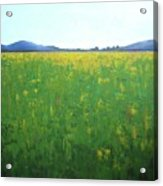 Summer Wild Field Acrylic Print