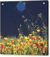 Sun Bathing Acrylic Print